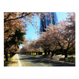 Cherry Tree Avenue Postcard