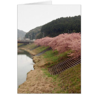 Cherry tree blossoms in Japan Greeting Card