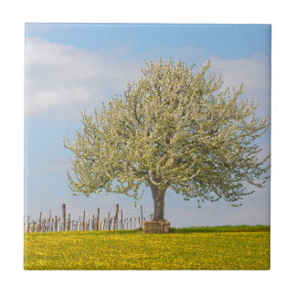 Cherry Tree In Spring Small Square Tile
