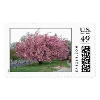 Cherry Tree Postage