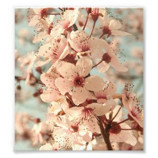 Cherry Tree Print Photograph