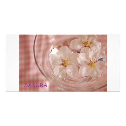 Cherry tree SAKURA Photo Cards