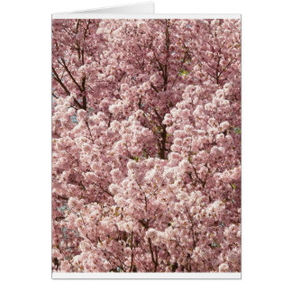 Cherry Trees Art Pink Blossoms Spring Park Party Greeting Card