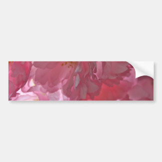 Cherry Trees Beautiful Pink Blossom Stickers