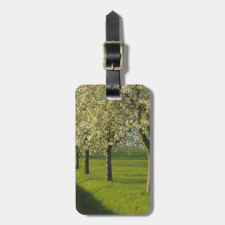 Cherry Trees Tags For Bags