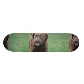Chesapeake Bay Retriever 21.6 Cm Old School Skateboard Deck