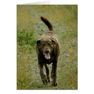 Chesapeake Bay Retriever, Dutch Harbor, AK Card