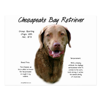 Chesapeake Bay Retriever History Design Postcard
