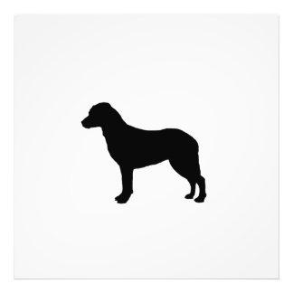 Chesapeake Bay Retriever hunting dog Silhouette Photo