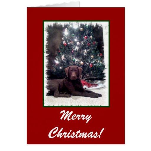 Chesapeake Bay Retriever, Merry Christmas! Greeting Card