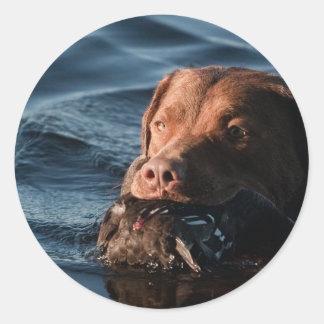 Chesapeake Bay Retriever Round Sticker