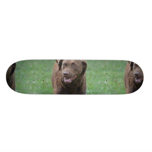 Chesapeake Bay Retriever Skateboard Deck