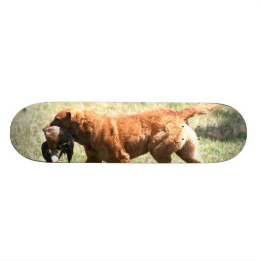 Chesapeake Bay Retriever Custom Skate Board