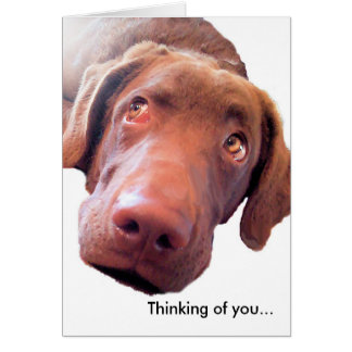 Chesapeake Bay Retriever, Thinking of you... Card