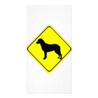 Chesapeake Bay Retriever Warning Sign Love Dogs Personalised Photo Card