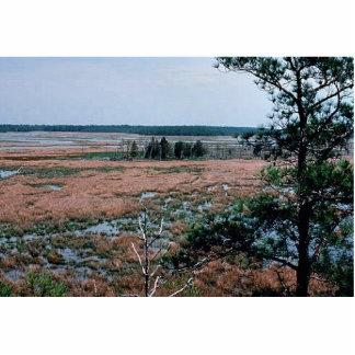 Chesapeake Bay Wetlands Photo Cut Outs