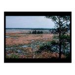 Chesapeake Bay Wetlands Postcard