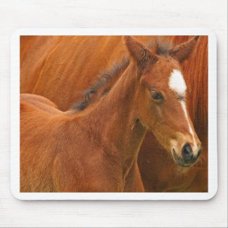 Chesnut Foal Mouse Pad