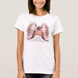 Chest anatomy ladies baby doll shirt