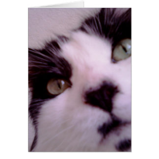 Chester the cat close up greeting card