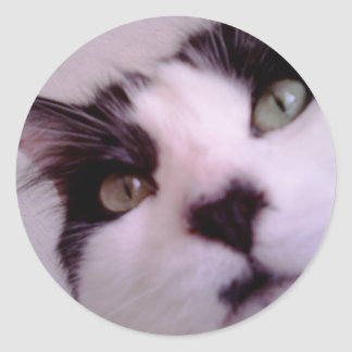 Chester the cat close up round sticker