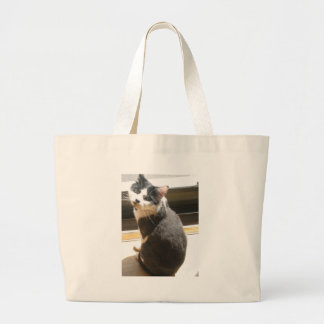 Chester the cat_sitting at the door bags