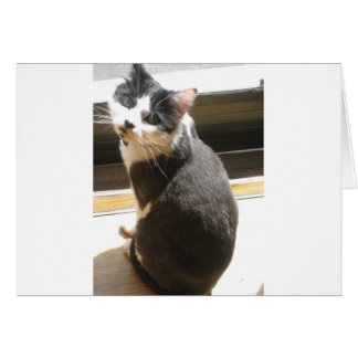 Chester the cat_sitting at the door greeting card