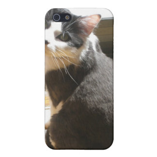 Chester the cat_sitting at the door iPhone 5/5S cover