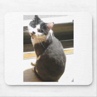 Chester the cat_sitting at the door mousepad
