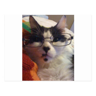 Chester the cat wearing glasses postcard