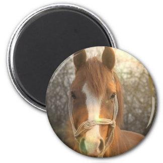 Chestnut Arab Horse Magnet Fridge Magnets
