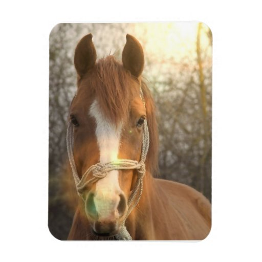 Chestnut Arab Horse Magnet Rectangular Magnets