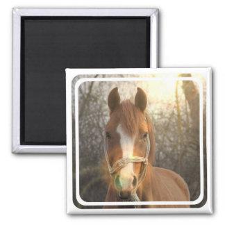 Chestnut Arab Horse Square Magnet Magnet