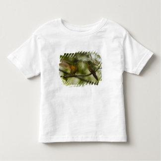 Chestnut-breasted Coronet Boissonneaua Toddler T-Shirt