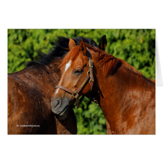 Chestnut Companions: Lean on Me Note Card