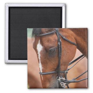 Chestnut Equine  Magnet