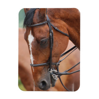 Chestnut Equine Premium Magnet Rectangle Magnets