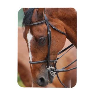 Chestnut Equine Premium Magnet