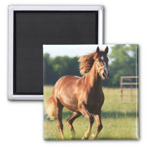 Chestnut Galloping Horse Magnet Magnet