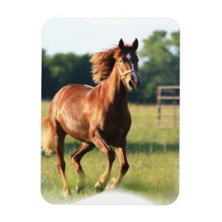 Chestnut Galloping Horse Premium Magnet