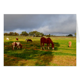 Chestnut_Horse,_And_Shetland_Ponies,_Card. Note Card
