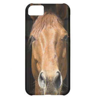 Chestnut Horse iPhone 5C Case