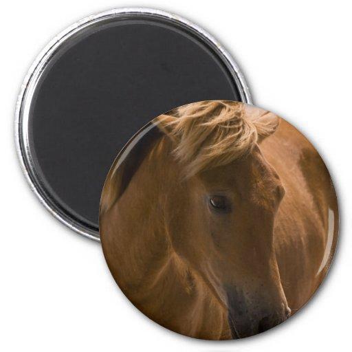 Chestnut Horse Design Magnet Magnets