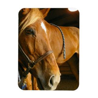 Chestnut Horse Design Premium Magnet