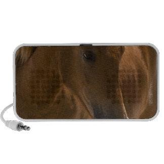 Chestnut Horse Design Speakers