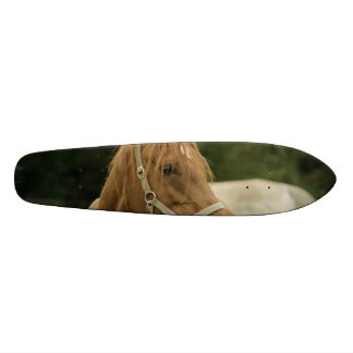 Chestnut Horse in a Field Skateboard Deck