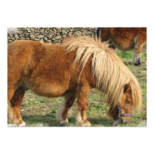 Chestnut Horse Invitation