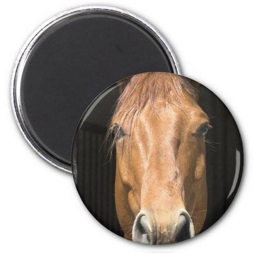 Chestnut Horse Magnet Refrigerator Magnet
