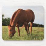 Chestnut Horse Mousepad