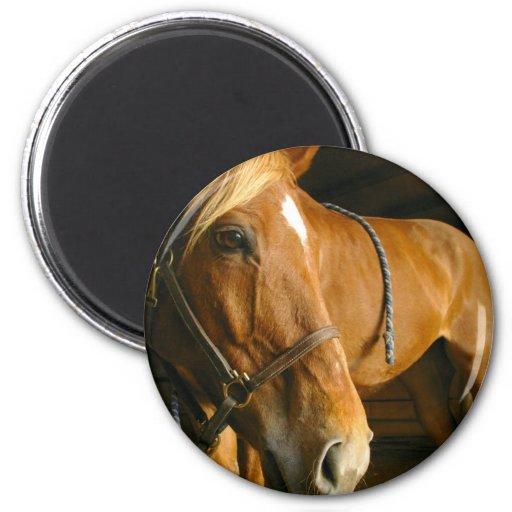 Chestnut Horse Photo Magnet Refrigerator Magnets